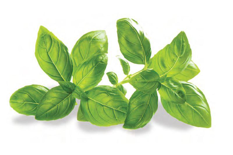 Pesto alla Genovese (ricetta originale)